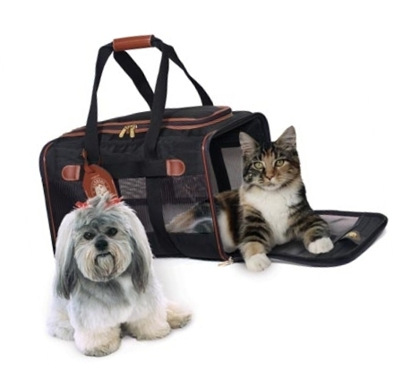 Comfortable moving with your pets